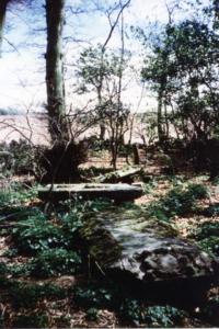 Nunraw woods